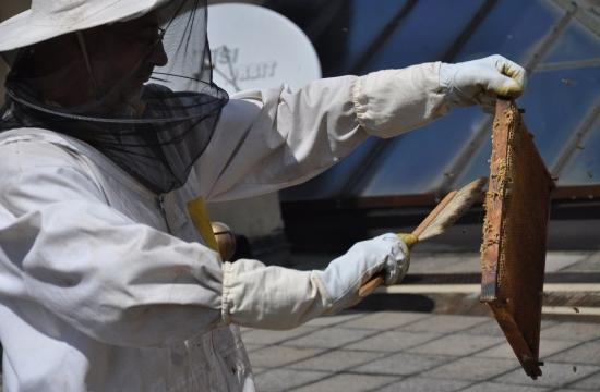 Pan Vácha ještě včelky opatrně ometá smetáčkem.