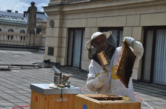 Tak jemně, aby ani jedna včelka nepřišla k úhoně.