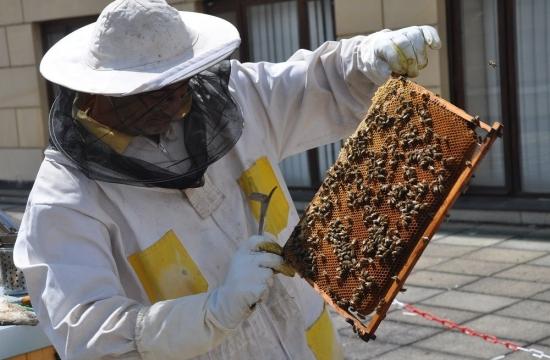 Kontrola pohledem: med je zralý.